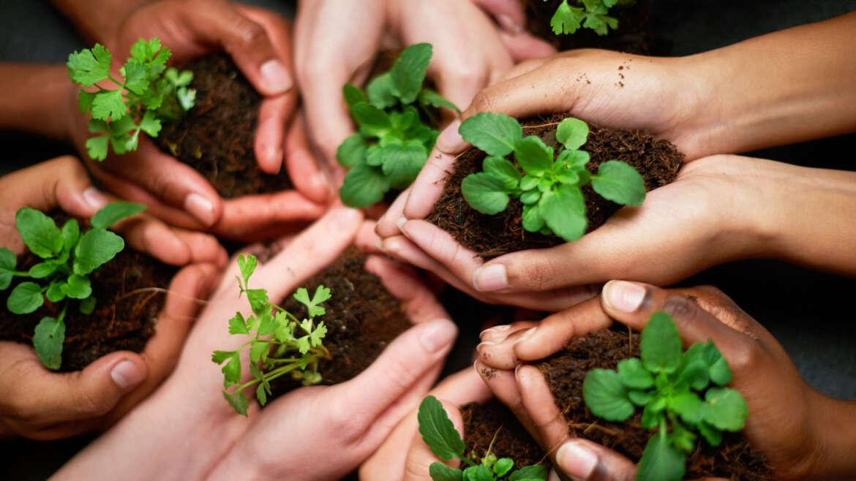 Ambiente e l'ecologia