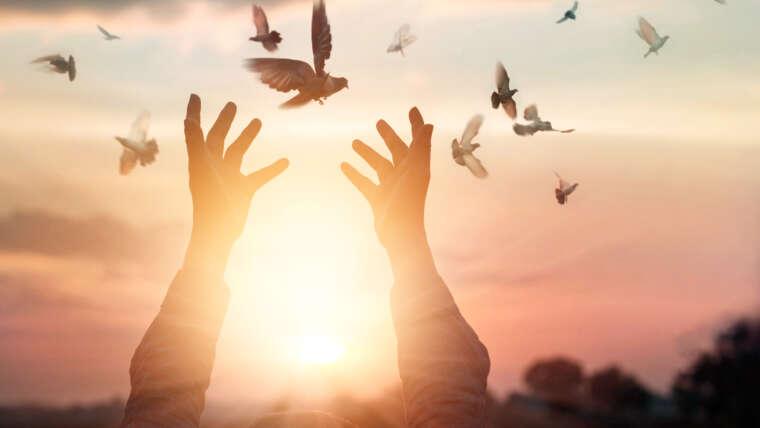 Libertà Religiosa, Evangelizzazione e Proselitismo